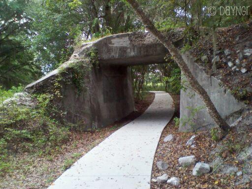 Payne's Prairie Trail