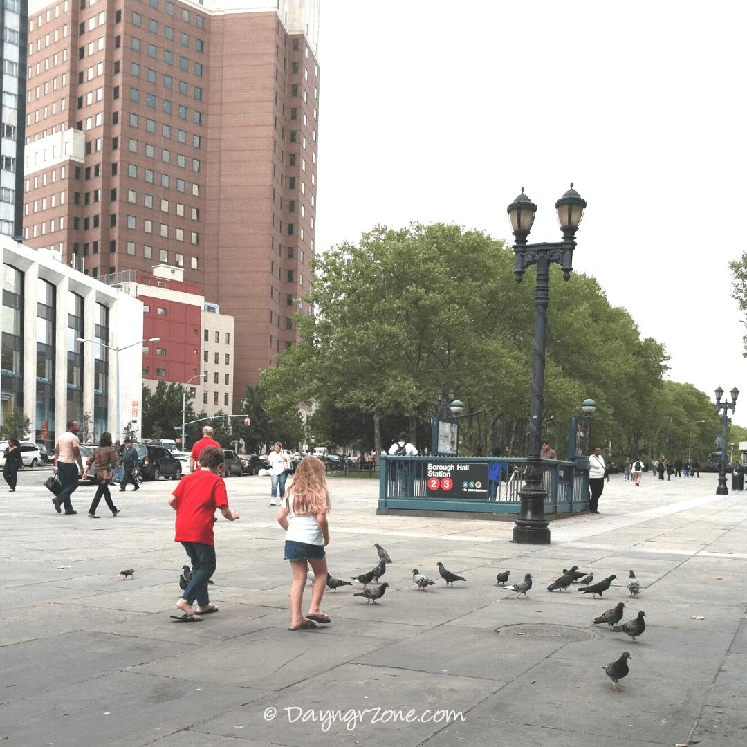Feeding-Pigeons-Columbus-Park-Brooklyn-NY, pigeons in ny