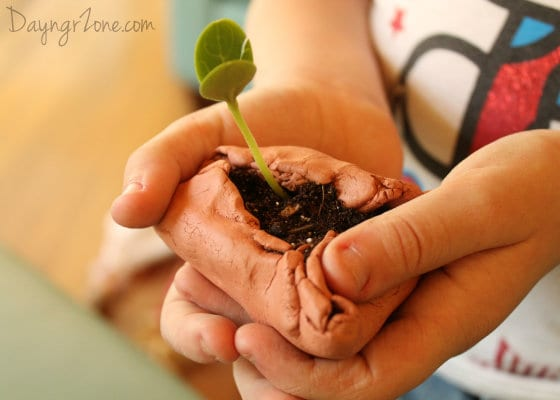 Watermelon Seedling