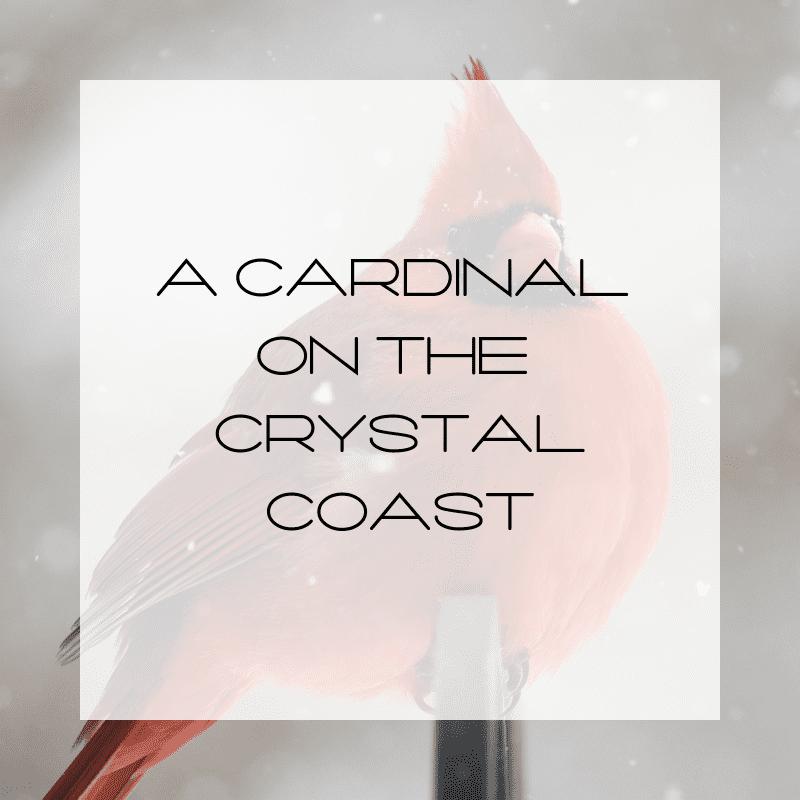 Cardinal, Winter Cardinal, Cardinal with snow