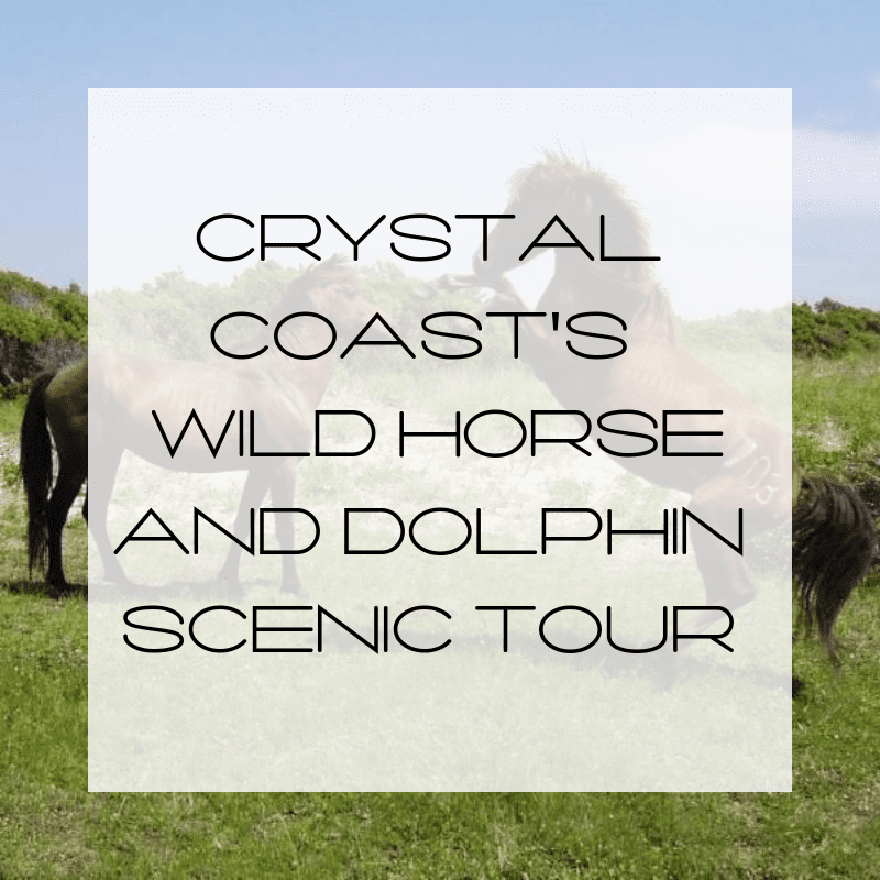 Wild Horse and Dolphin Scenic Tour